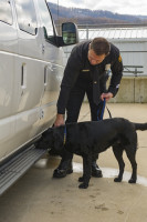 LAFD Investigator/K9 Handler Gus Gaeta and ATF Accelerant Detection Canine Blue